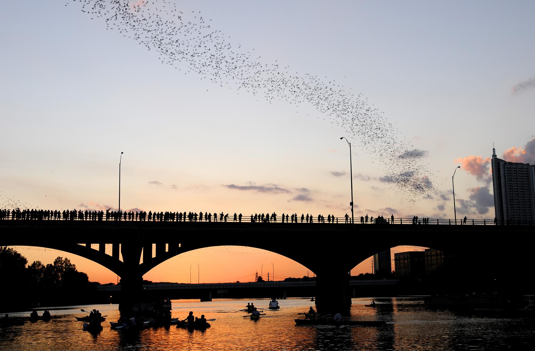 austin-bats2